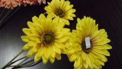 svazek květin gerbery