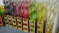 barevná kroucená tráva